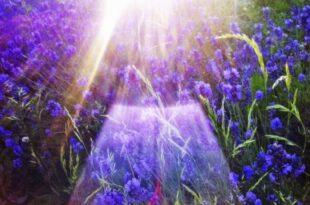 Lavendelduft 445x332 310x205 - Givaudan lässt überraschend nach