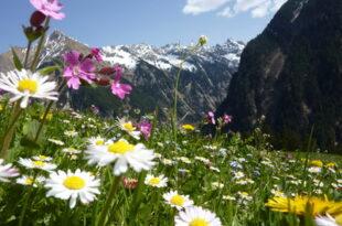 Vorarlberg 310x205 - Tourismus in Vorarlberg wächst weiter