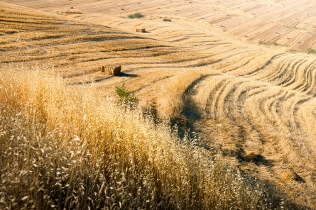 Bild von Österreichische Landwirtschaft vorne dabei
