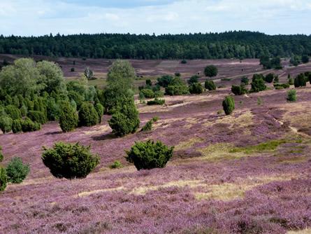 Photo of DBU fordert nachhaltigen Umgang mit naturnaher Landschaft