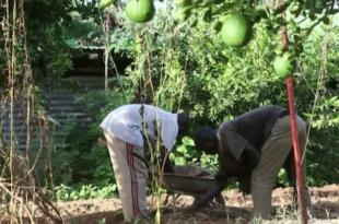Biolandwirtschaft Sahel