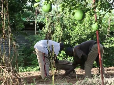 Bild von Bio-Landwirtschaft in der Sahelzone