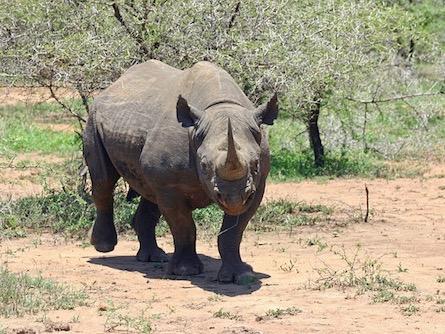 Photo of Südafrika: über 1000 Nashörner durch Wilderer getötet
