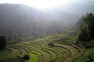 Nepal Reisterrassen