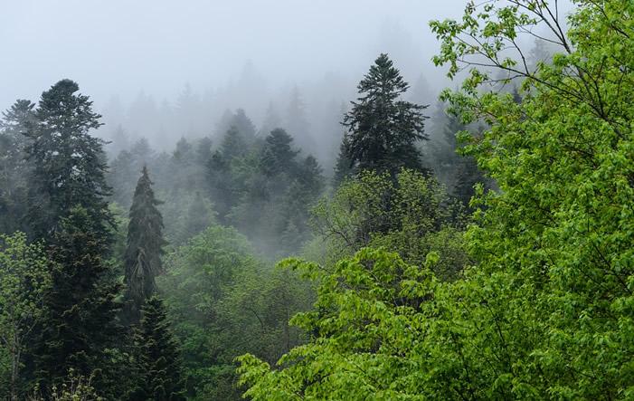 deutscher Wald - Waldbesitzerverbände beklagen Folgen des Klimawandels für deutschen Wald