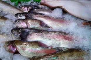 Auslage Fisch 310x205 - Träume werden Realität, Kommentar zu Metro von Annette Becker