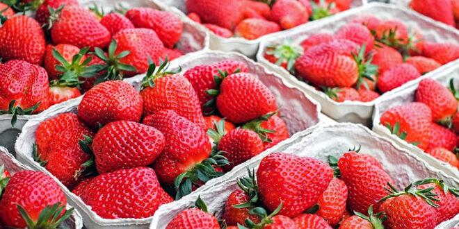 Erdbeeren 660x330 - Damit Nahrung nicht zum Müll wird
