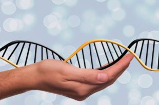 DNS 310x205 - Rechtsmediziner für Ausweitung der DNS-Analyse