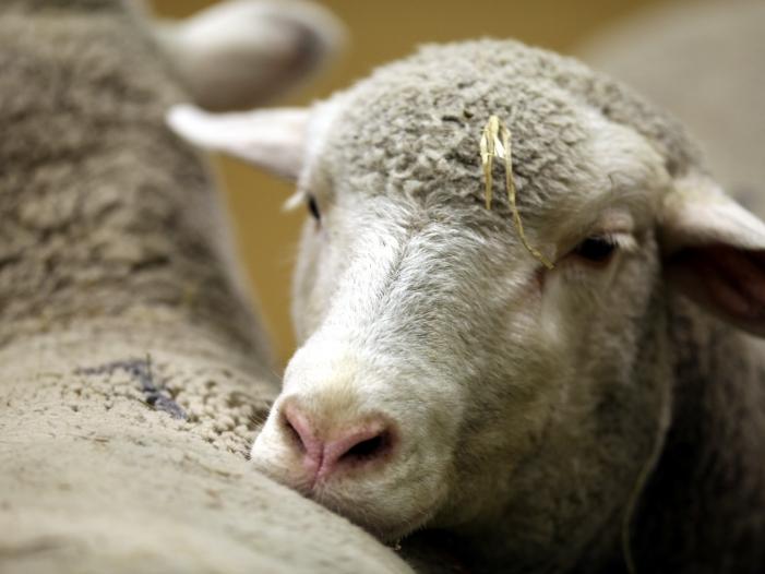 Grünen-Politiker Meyer: Mehr Geld aus EU-Topf für Tierschutz ausgeben