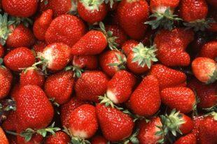 lieferengpaesse und steigende preise fuer erdbeeren erwartet 310x205 - Lieferengpässe und steigende Preise für Erdbeeren erwartet