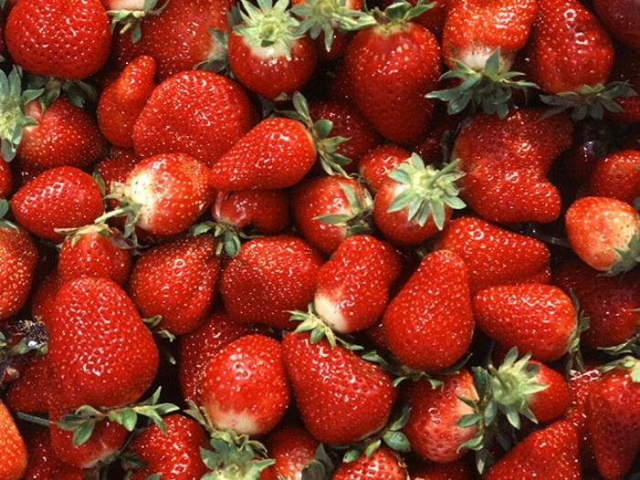 lieferengpaesse und steigende preise fuer erdbeeren erwartet - Lieferengpässe und steigende Preise für Erdbeeren erwartet