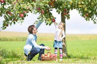 Apfelbaum 310x205 - Selbstversorger: Das Beste kommt aus dem eigenen Garten