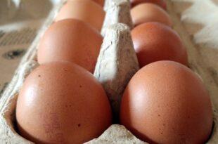 gruene fordern kennzeichnungspflicht fuer alle eier produkte 310x205 - Grüne fordern Kennzeichnungspflicht für alle Eier-Produkte