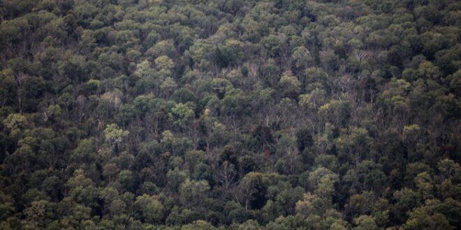 regenwuermer aus europa bedrohen waelder in nordamerika 660x330 - Regenwürmer aus Europa bedrohen Wälder in Nordamerika