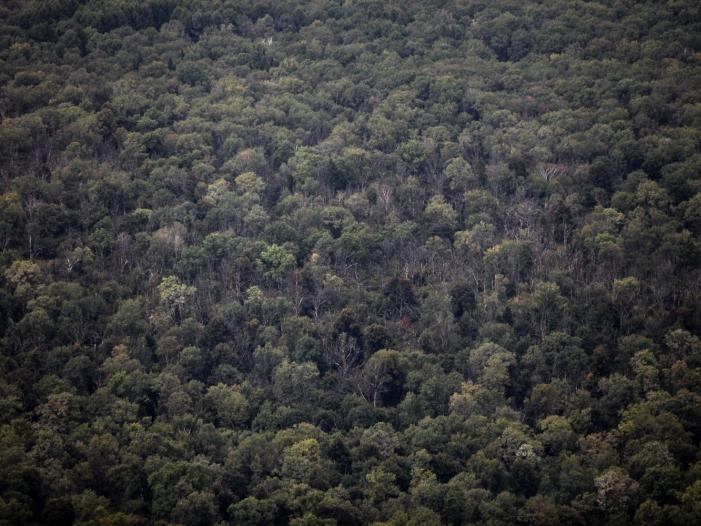 regenwuermer aus europa bedrohen waelder in nordamerika - Regenwürmer aus Europa bedrohen Wälder in Nordamerika