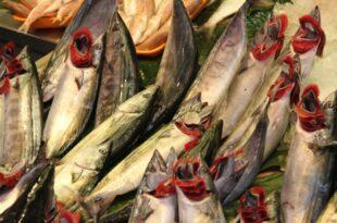 greenpeace warnt vor gentechnik im fisch 310x205 - Greenpeace warnt vor Gentechnik im Fisch