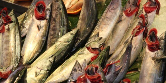 greenpeace warnt vor gentechnik im fisch 660x330 - Greenpeace warnt vor Gentechnik im Fisch