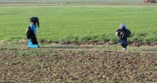 oesterreich warnt vor neuen schlepperrouten in der eu 310x165 - Österreich warnt vor neuen Schlepperrouten in der EU
