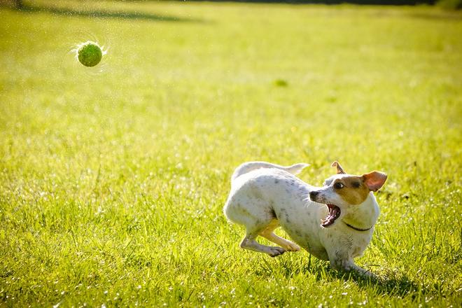 Photo of Versicherungen für den Hund: Welche sind sinnvoll, welche nicht?