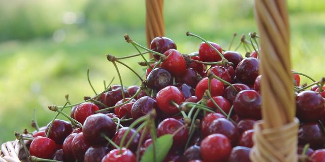Warenkorb 660x330 - Lebensmittel per Mausklick: die Digitalisierung des Lebensmittelhandels