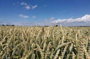 Bauernpräsident rechnet mit Ernteausfällen 310x205 - Bauernpräsident rechnet mit Ernteausfällen
