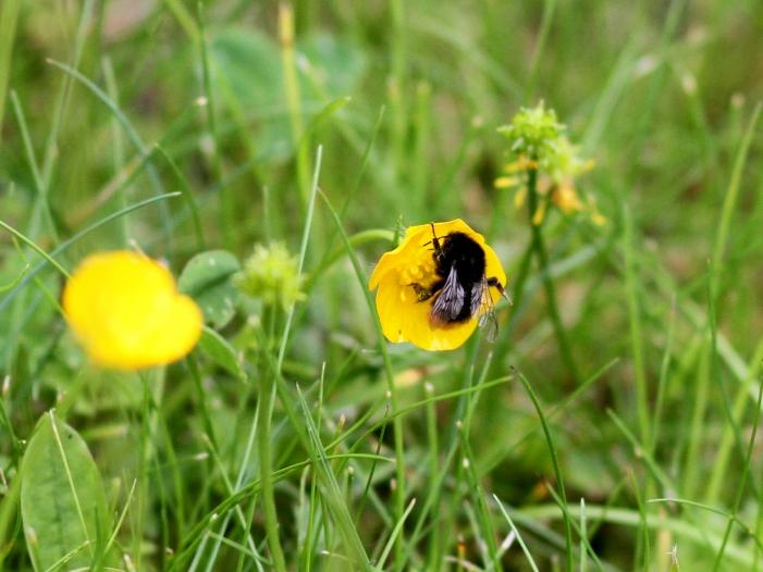 "Photo of Regierung sieht ""akuten Handlungsbedarf"" gegen Insektensterben"
