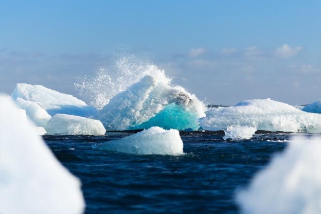 Arktis - Die Arktis - faszinierender Lebensraum für Pflanzen, Tiere und Menschen