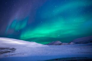Polarlichter 310x205 - Die Arktis - faszinierender Lebensraum für Pflanzen, Tiere und Menschen