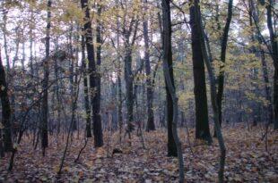 Hannibal Verein organisierte militärisches Kampftraining 310x205 - Bund tritt Zehntausende Hektar kostenlos an Naturschützer ab
