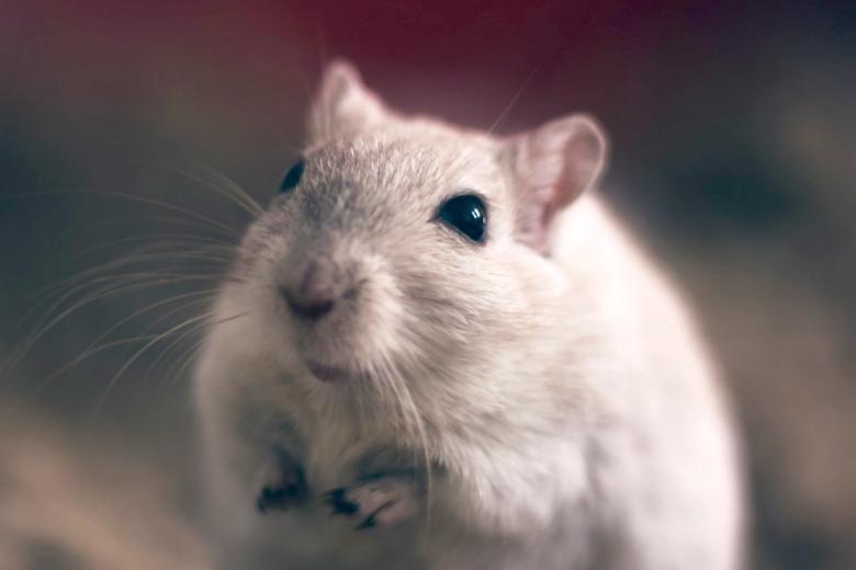 Photo of Fast 2,8 Millionen Tiere für Tierversuche verwendet oder getötet