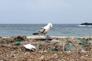 Gruene fordern globale Konvention gegen Plastikmuell 310x205 - Grüne fordern globale Konvention gegen Plastikmüll