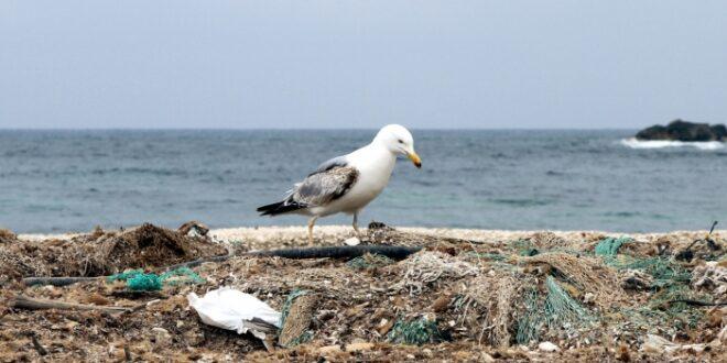 Gruene fordern globale Konvention gegen Plastikmuell 660x330 - Grüne fordern globale Konvention gegen Plastikmüll