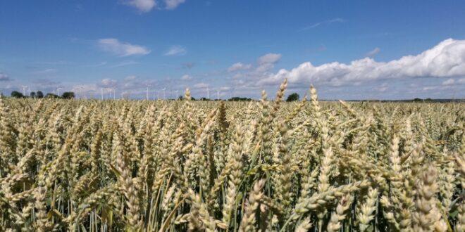 Nitrat im Grundwasser EU Kommission fordert weitere Verschaerfungen 660x330 - Nitrat im Grundwasser: EU-Kommission fordert weitere Verschärfungen