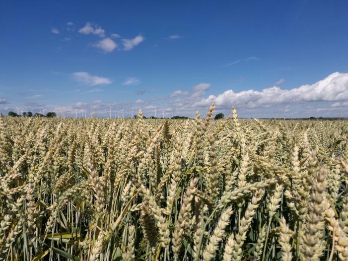 Bild von Nitrat im Grundwasser: EU-Kommission fordert weitere Verschärfungen