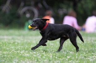 Tierpathologe fordert mehr Schutz für Haustiere 310x205 - Tierpathologe fordert mehr Schutz für Haustiere