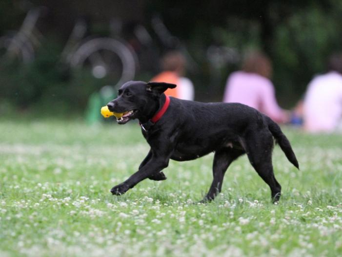 Bild von Tierpathologe fordert mehr Schutz für Haustiere