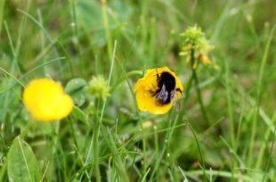 EU will Risiken fuer Bienen bei Pestizidzulassung laxer pruefen 310x205 - EU will Risiken für Bienen bei Pestizidzulassung laxer prüfen