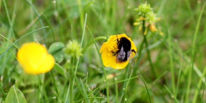 EU will Risiken fuer Bienen bei Pestizidzulassung laxer pruefen 660x330 - EU will Risiken für Bienen bei Pestizidzulassung laxer prüfen