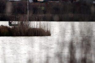 Immer weniger Aale in deutschen Binnengewässern 310x205 - Immer weniger Aale in deutschen Binnengewässern