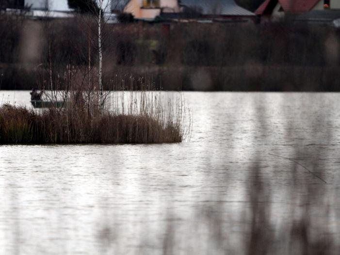 Immer weniger Aale in deutschen Binnengewässern
