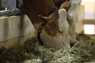 Einsatz von Antibiotika in Tierstaellen kaum zurueckgegangen 310x205 - Einsatz von Antibiotika in Tierställen kaum zurückgegangen