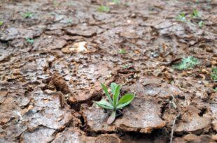 Rheinland Pfalz Wissing will Steuersenkung auf Duerreversicherungen 310x205 - Rheinland-Pfalz: Wissing will Steuersenkung auf Dürreversicherungen