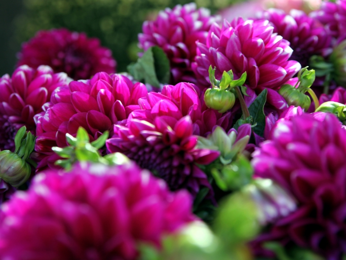 Photo of Umfrage: Immer mehr Bürger kaufen Blumen im Internet
