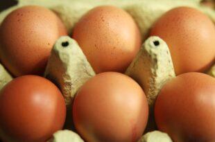 Kloeckner pocht auf EU Kennzeichnungspflicht fuer Produkte mit Eiern 310x205 - Klöckner pocht auf EU-Kennzeichnungspflicht für Produkte mit Eiern