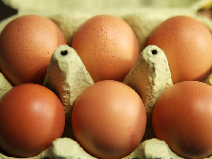 Kloeckner pocht auf EU Kennzeichnungspflicht fuer Produkte mit Eiern - Klöckner pocht auf EU-Kennzeichnungspflicht für Produkte mit Eiern
