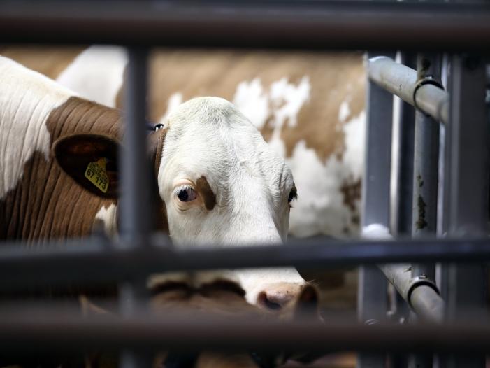 Bild von Mehr registrierte Fälle von Tierquälerei