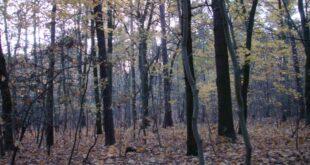 Naturschützer warnen vor Waldsterben in Sachsen Anhalt 310x165 - Naturschützer warnen vor Waldsterben in Sachsen-Anhalt