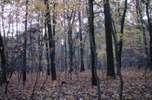 Naturschützer warnen vor Waldsterben in Sachsen Anhalt 310x205 - Naturschützer warnen vor Waldsterben in Sachsen-Anhalt