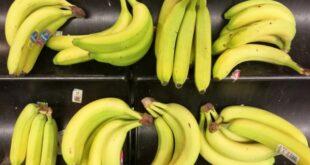Forscher rechnet trotz Bananenkrise nicht mit Engpass 310x165 - Forscher rechnet trotz Bananenkrise nicht mit Engpass