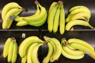 Forscher rechnet trotz Bananenkrise nicht mit Engpass 310x205 - Forscher rechnet trotz Bananenkrise nicht mit Engpass